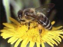 Bugs That Bite Interesting Facts Amp Necessary Precautions